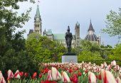 Tulipanes Canadá