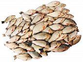 River Fish Carp