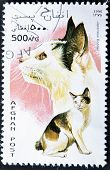 Afghanistan - Circa 1996: A Stamp Printed In Afghanistan Showing Japanese Bobtail, Circa 1996