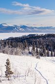 Taiga-Schneeschuh-Trail Landschaft Yukon t Kanada