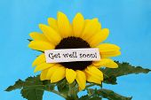 stock photo of get well soon  - Get well soon card on sunflower on  blue background - JPG
