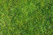 Grass Field Top View Texture