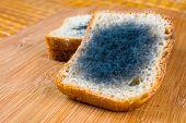 Moldy Bread.