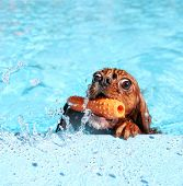 stock photo of pal  - a dog at a local public pool - JPG