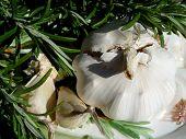 Rosemary + Garlic