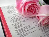 Bíblia e rosas