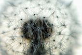 foto of blown-up  - blown dandelion flower head close up against the sky - JPG