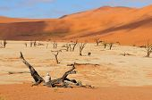 Tree Skeletons, Deadvlei, Namibia