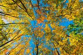 Low Angle Golden Leaves In The Woods