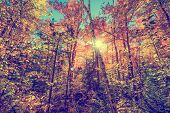 Sun Shining Through Leaves In An Autumn Forest - Retro, Faded, Instagram