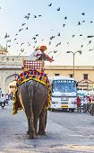 Elephant In Jaipur Fort With Tourists