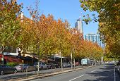 Lygon Street In Autumn, Melbourne Australia.