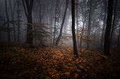 stock photo of vegetation  - Dark mysterious forest with fog in autumn on Halloween - JPG