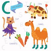 Very Cute Alphabet.c Letter. Cat, Cow, Camel, Carrots. Alphabet