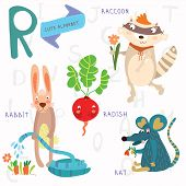 Very Cute Alphabet.r Letter.rat, Raccoon, Radishes, Rabbit.