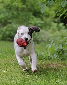 Dog Playing