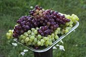 Grapes On Metal Tray