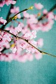 stock photo of judas tree  - Abstract of vintage redbud tree flowers with antique style - JPG