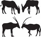 Vector Silhouettes Of Animals