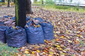 stock photo of leaf-blower  - leaves rake in the row on autumn - JPG