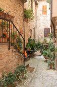 Quiet Street With Flowers (spello, Italy)