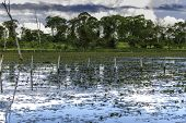 Amazing Pantanal River - Pantanal is one of the world's largest tropical wetland areas located in Brazil , South America