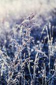 Frozen meadow flower