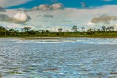 Pantanal is one of the world's largest tropical wetland areas located in Brazil , South America