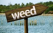 picture of mary jane  - Weed wooden sign and the beach as the background - JPG