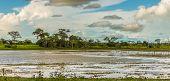 Amazing Pantanal River