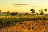 Pantanal landscape in Brazil, Latin America