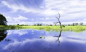 Wetlands in Pantanal, Brazil