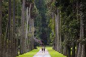 Peradeniya Garden. Kandy, Sri Lanka.