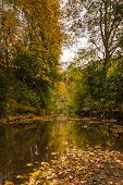 Autumn In Jesmond Dene Vertical