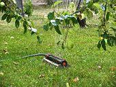Sprinkler Under Apple Tree