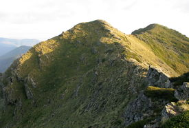 picture of bogong  - Crosscut Saw in the Alpine National Park  - JPG