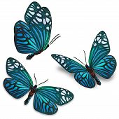 image of blue butterfly  - Three blue butterfly isolated on white background - JPG