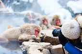 image of macaque  - Snow Monkeys Japanese Macaques bathe in onsen hot springs at Nagano - JPG