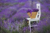 image of lavender field  - Summer - JPG