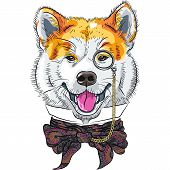image of akita-inu  - hipster dog Akita Inu breed in a glasses and bow tie - JPG