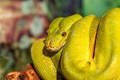 stock photo of green snake  - fantastic close - JPG