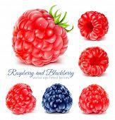 pic of blackberries  - Collection of ripe raspberries and blackberry - JPG