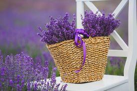 foto of violet flower  - Summer - JPG
