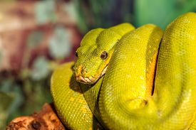 pic of green snake  - fantastic close - JPG
