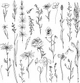 Постер, плакат: floral doodle set