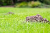 foto of foreground  - Two Mole mounds in the garden taken from a low position of view - JPG