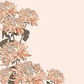 picture of chrysanthemum  - Bouquet of chrysanthemum on beige background - JPG