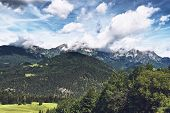picture of snow capped mountains  - Tree - JPG