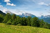 picture of snow capped mountains  - High angle view of grassy meadow and fir trees with snow - JPG