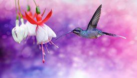 foto of hummingbirds  - Hummingbird  - JPG